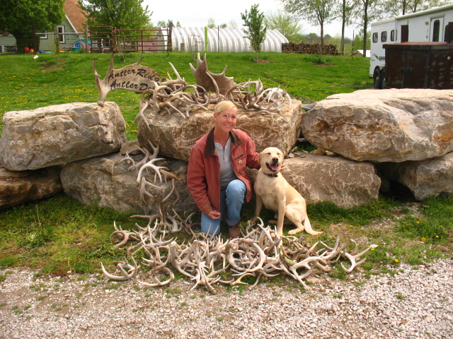Shed Antler Dogs For Sale